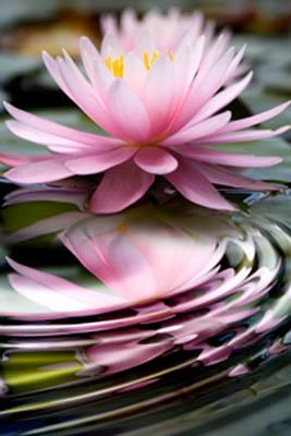 lotusopeningcounseling
